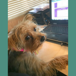 dog-at-computer-write-blog